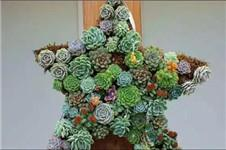 Make A Succulent Wreath at Home
