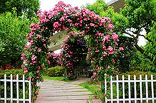 Decorative Garden Arch Tips